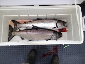 20# winter chinook